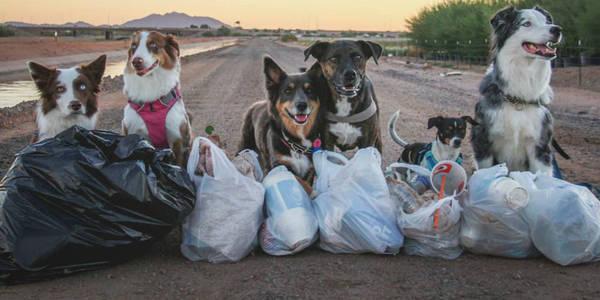 Покарання за сміття: Київрада підтримує штраф у розмірі $63