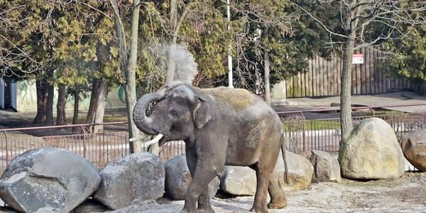 Щаслвий слон із київського зоопарку купається під дощем