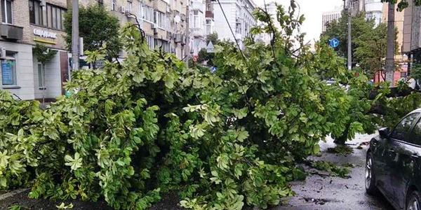 Через зливу в Києві попадали дерева